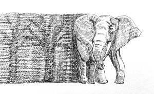 Elephant from trees