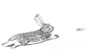 Rabbit in repose