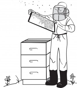 Illustration for bee-keeping business
